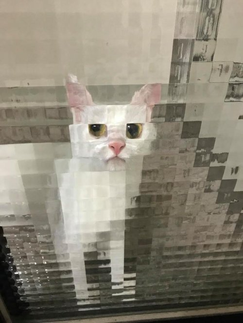 Pixelated cat through the windows